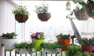 Làm đẹp ban công ở chung cư bằng chậu hoa