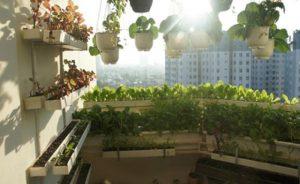 Làm đẹp ban công ở chung cư thành vườn rau mini