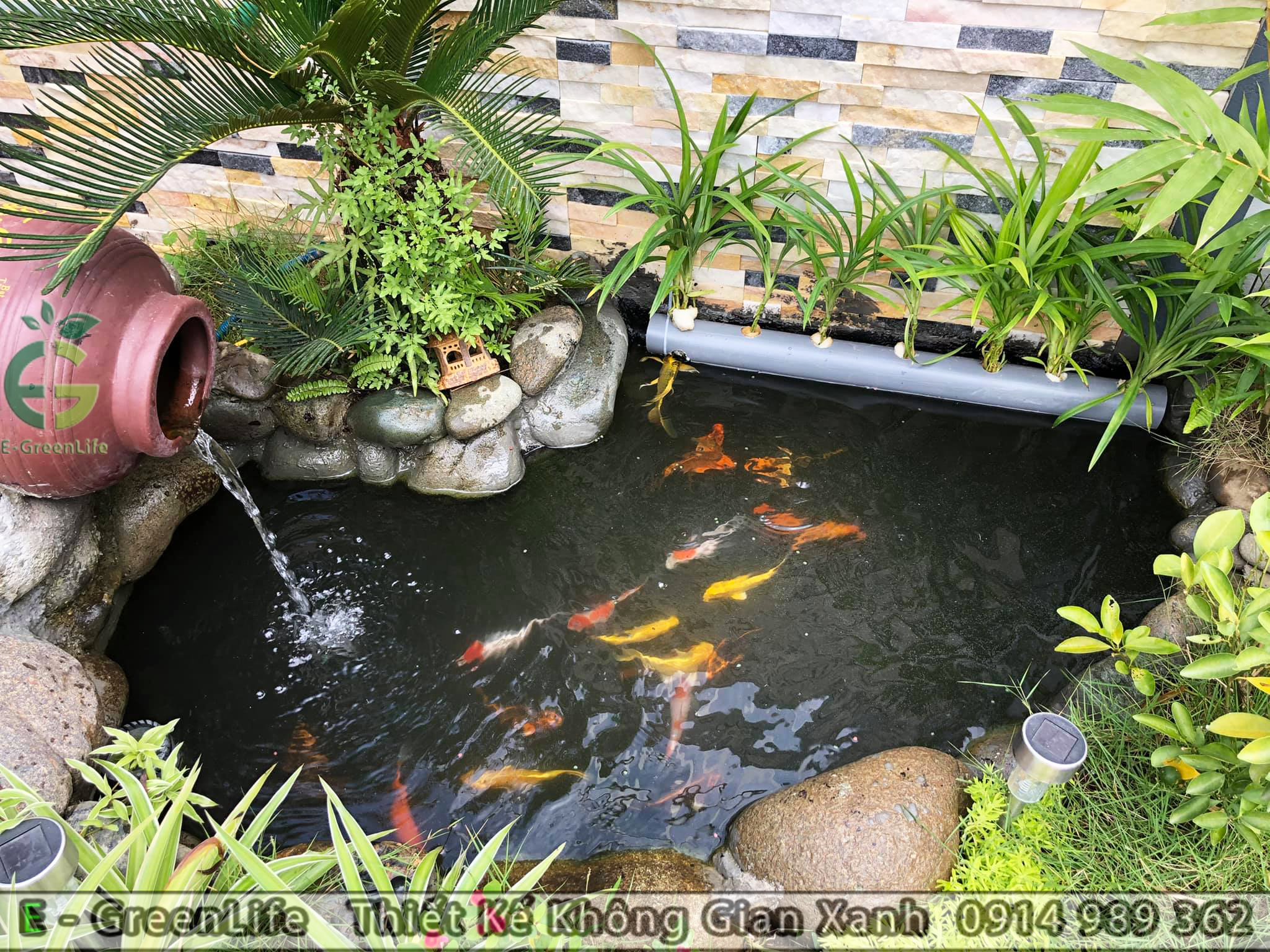 thiết kế bể cá cảnh, hồ cá koi cho sân vườn biệt thự