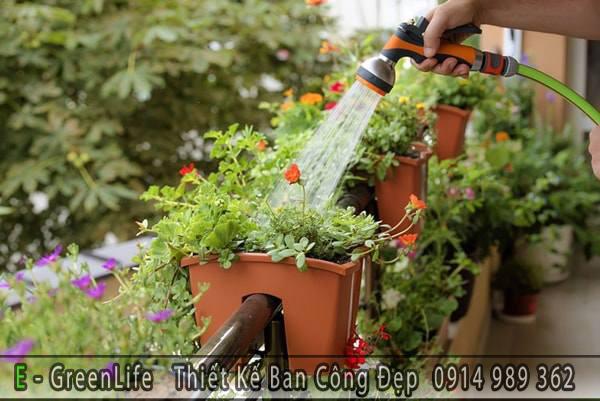 Gợi ý hoa mười giờ trồng ban công