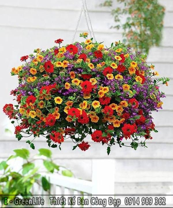 Gợi ý hoa triệu chuông treo ban công
