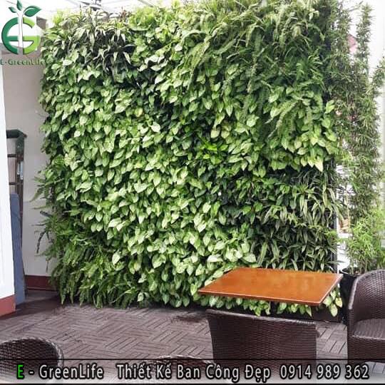 Vườn tường đứng - tường cây thật