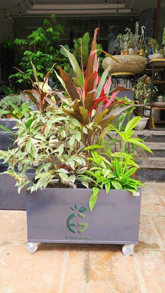 Chậu trơn composite trồng hoa, cây cảnh